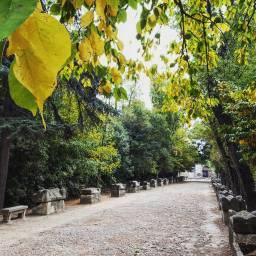 Arles, Alyscamps necropolis