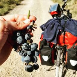 Camino de Santiago, between Logrono and Burgos.