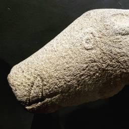 Cáceres., museo.