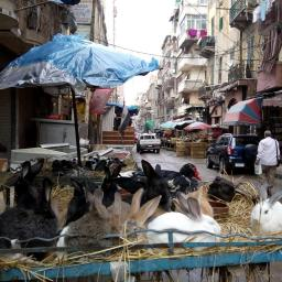 Alexandria, street stalls.